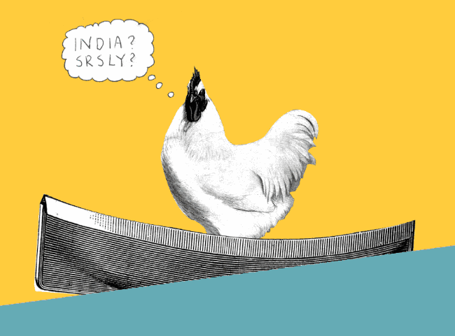 confused_india_bound_chicken