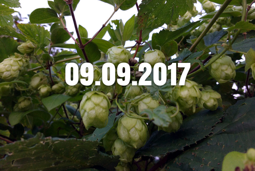 Hops on a Bristol allotment + today's date.