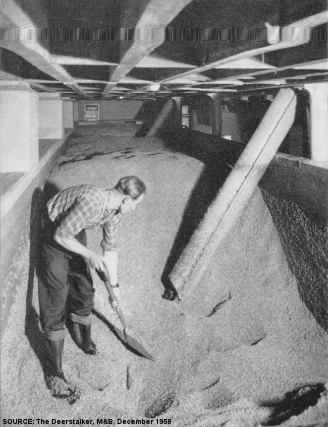 A man in a trough of malt with shovel.