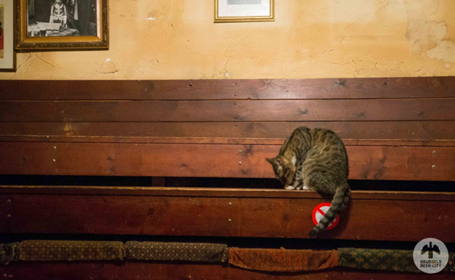 A cat in a Brussels bar.