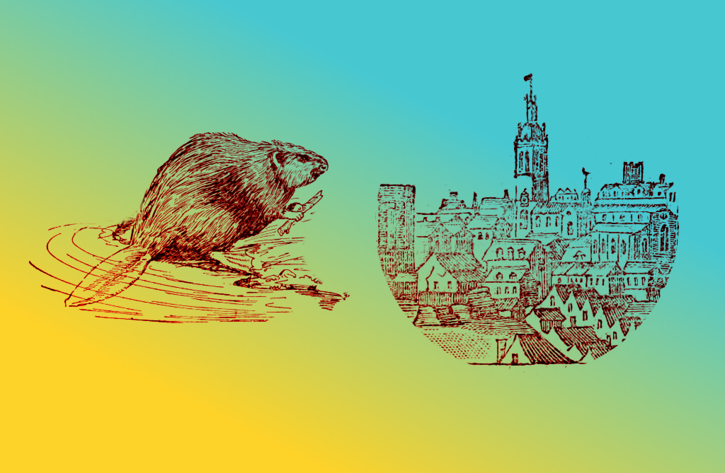 Beaver + Town.