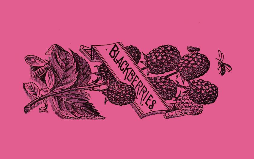Blackberries in beer: Mûre Tilquin